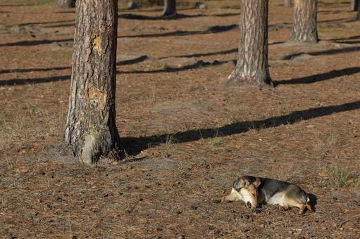 Forest dog