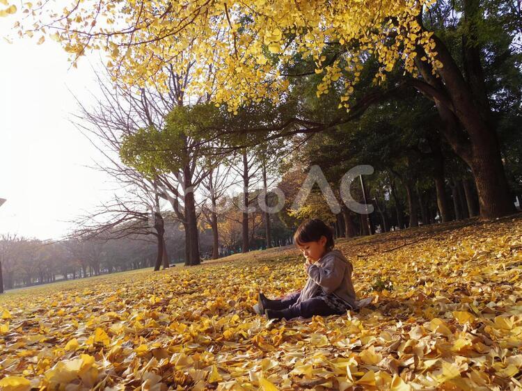 秋のイチョウの絨毯の写真