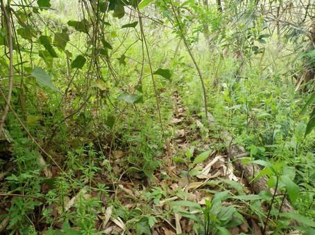 Beast path in the bush