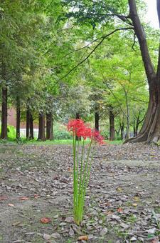 피안 꽃 2