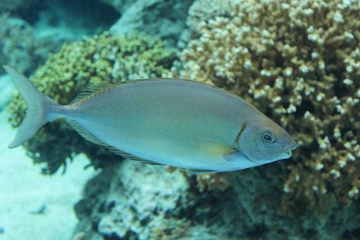 산호초의 물고기 오키나와의 바다