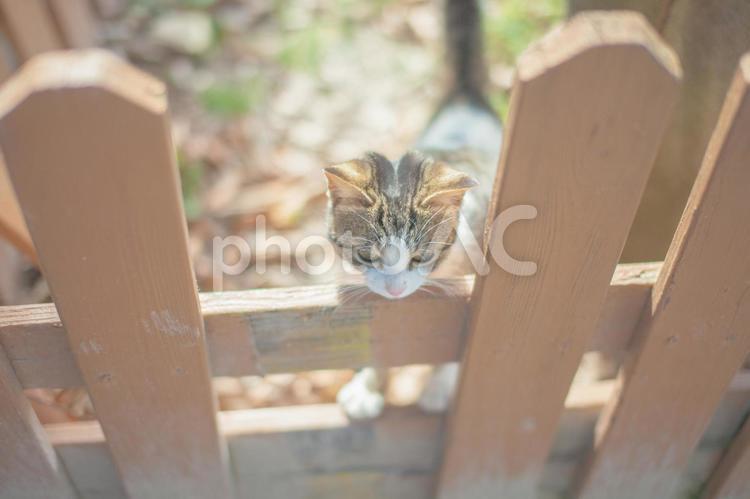猫の散歩3の写真