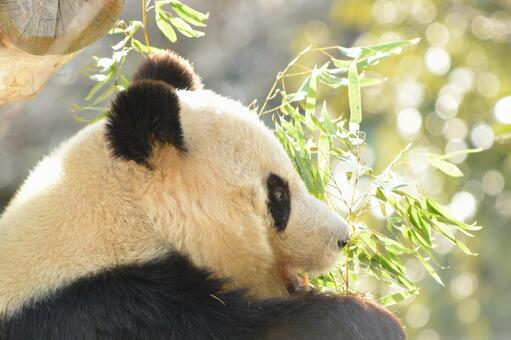 Giant panda with profile of 10 10