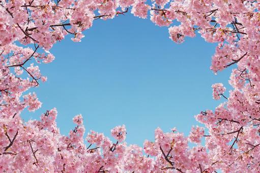 Sakura gathering background
