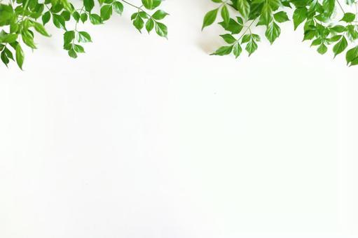 植物材料21白色背景