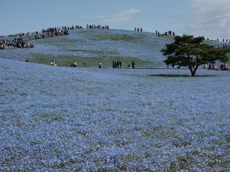 미하라시의 언덕 네모 피라