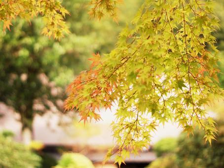 가을 奥津 온천 단풍 일품 단풍의 명소 奥津 케 오카야마 관광 3