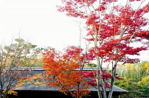 Fall scenery 26