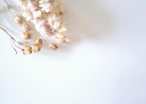 Dried flower image