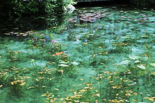 기후현 이타 도리 모네의 연못 07