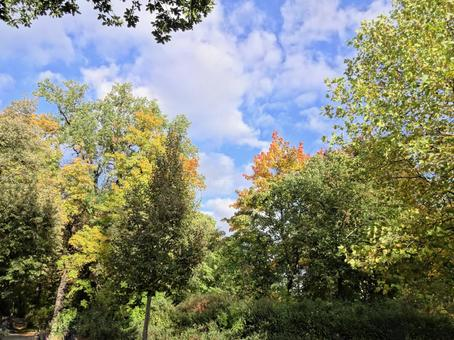 뷔르츠부르크의 숲