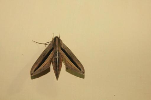 Shape of moth arrow stopping on wall
