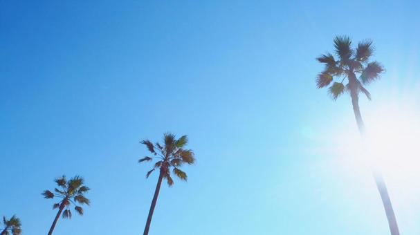 Summer sky and palm trees 16: 9 (wide)