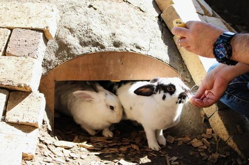 굴에서 나온 토끼