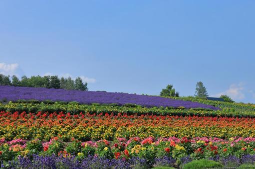 ぜるぶ 언덕 화려한 꽃밭 빈 공간 있음