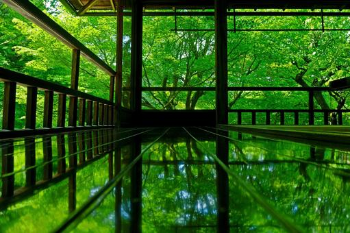 Ruriko-in Temple in the fresh green period