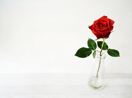 鮮紅色單玫瑰背景素材