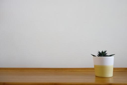 Houseplants on a wooden bench