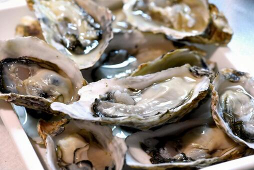 Oyster oyster