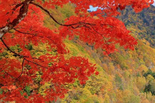 새빨간 단풍 나무 배경에 단풍 산