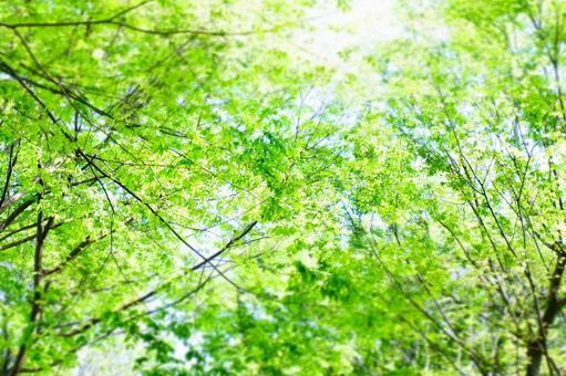 Take a walk along the fresh green tree-lined road