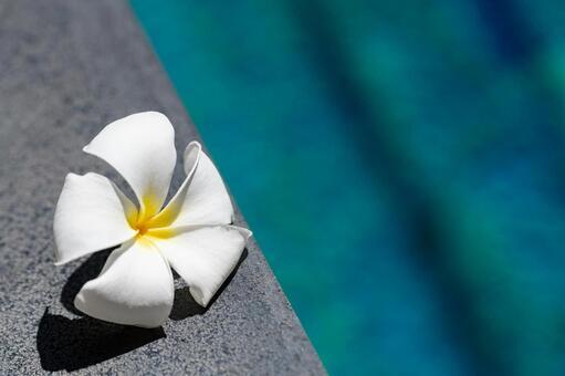 Plumeria on the poolside