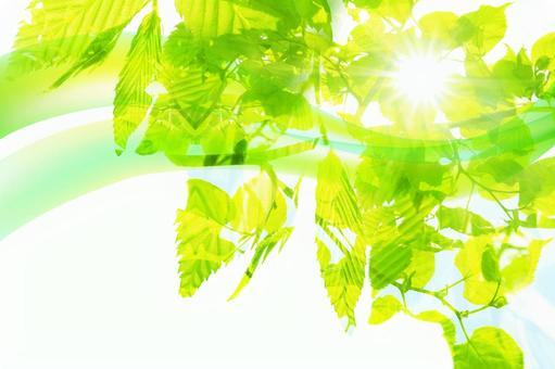 여름의 햇살과 바람