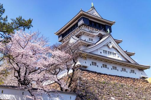 만개 한 벚꽃과 고쿠라 성