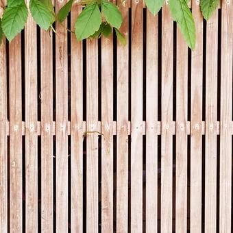 Lattice door and ivy 1