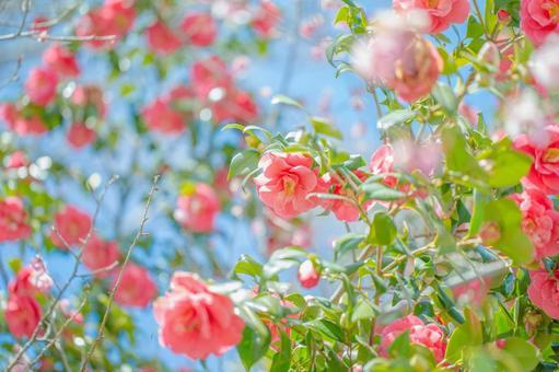 Fantastic flowers 160