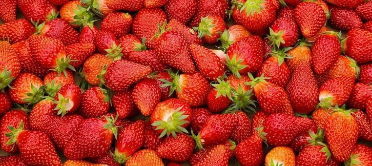 딸기 투성이