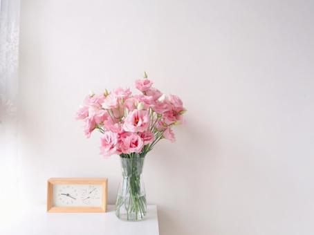 與花同住 粉紅色洋桔梗