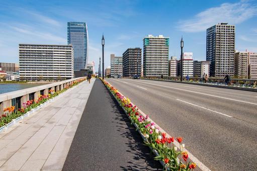 Bandai Bridge Tulips