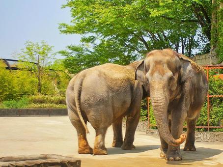 코끼리 두 마리