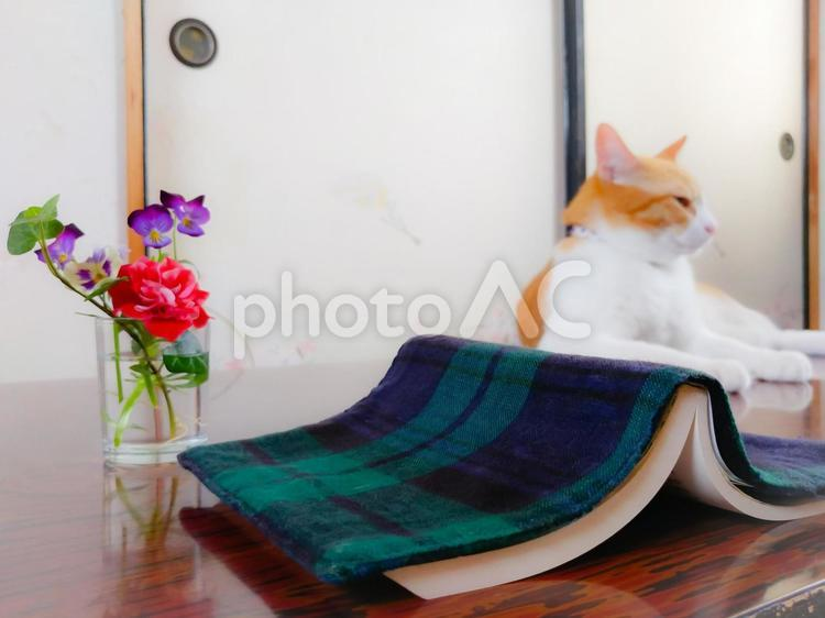 猫のいる和室で読書の写真