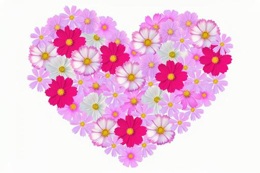 Flower Heart Cosmos