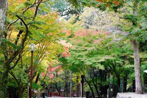 Nara autumn scenery