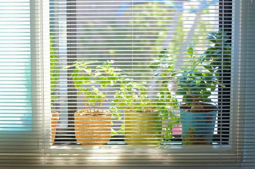 Windows potted plant