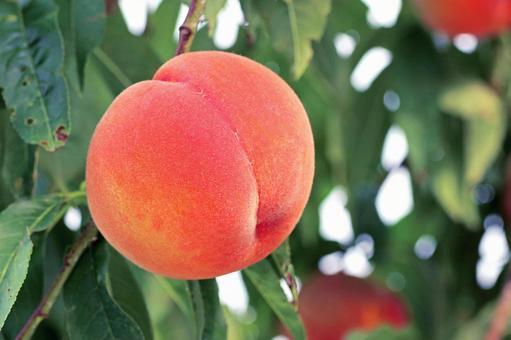 Peach _ up 01