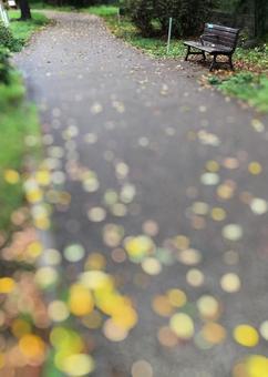 Fallen leaves promenade