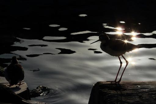 Waterside bird 6