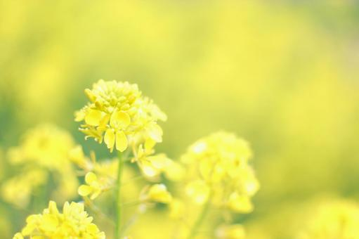 노란색 질감