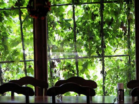 Green curtain Green full of cafe