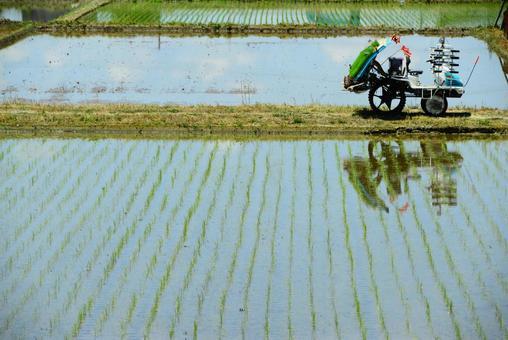농업 모내기