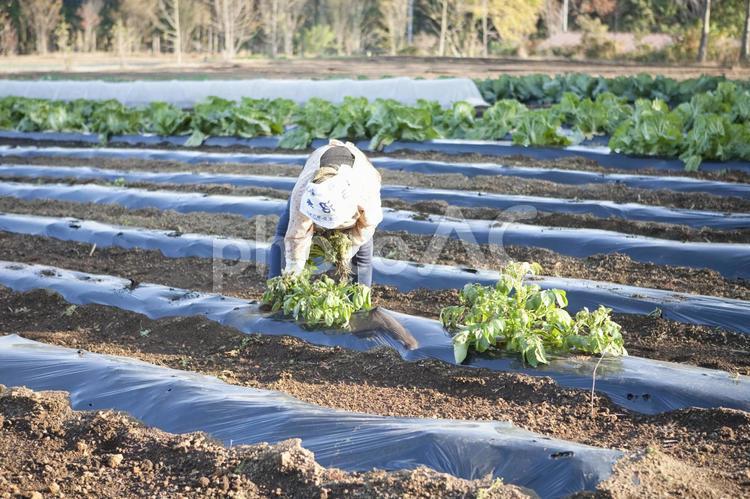 農業の写真