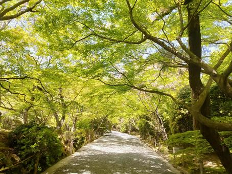 Road of green leaves