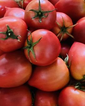 Fruit tomato (7)
