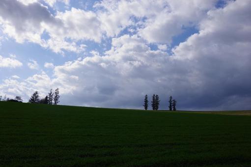 언덕의 나무
