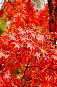 가을의 교토 단풍 배경 화면