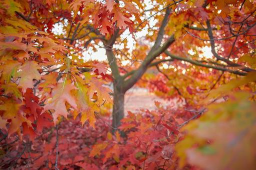 Autumn leaves trees 37